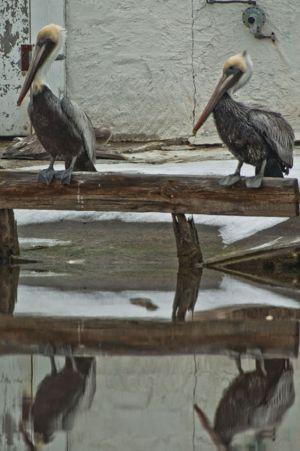 Swanquarter6.jpg